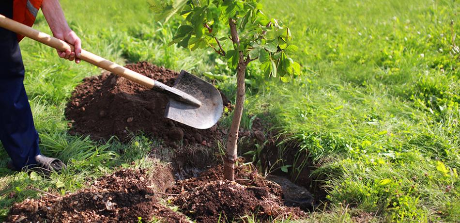 plantar uma árvore